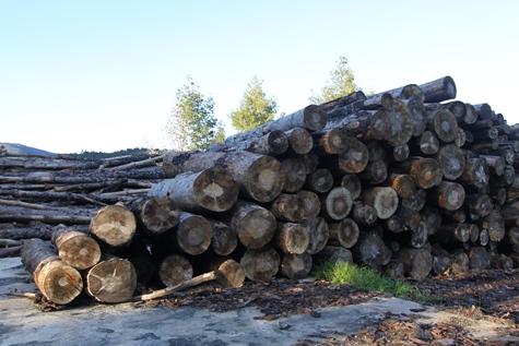 ajuts gestió forestal